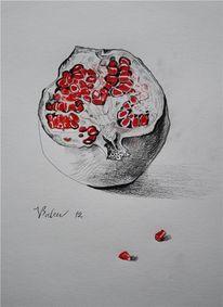 Granatapfel, Zeichnung, Zeichnungen