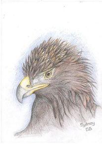 Steinadler, Vogel, Zeichnung, Adler
