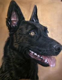 Pastellmalerei, Hundeportrait, Zeichnung, Hund