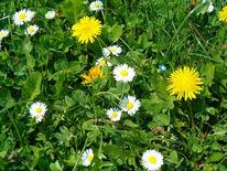Fotografie, Pflanzen, Blumenwiese,