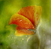 Malerei, Mohn, Pflanzen, Blumen