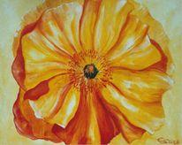 Blüte, Malerei, Mohn, Flora
