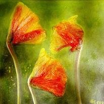 Blumen, Flora, Mohn, Pflanzen