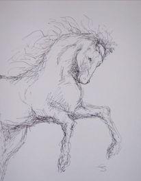 Zeichnung, Skizze, Pferde, Zeichnungen