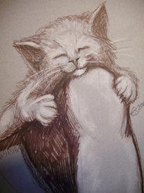 Katze, Portrait, Knie, Tiere