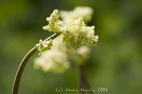 Natur, Novalis, Blumen, Fotografie