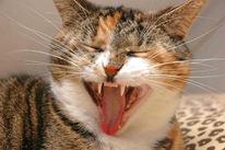 Tiere, Katze, Fotografie, Pinnwand