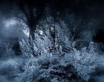 Fotografie, Baum, Landschaft, Woods