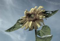 Flora, Fotografie