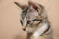 Katze, Pinnwand