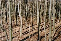 Baum, Wald, Fotografie, Landschaft