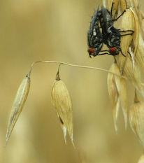 Insekten, Konzept, Fliegen, Kornfeld