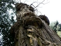 Baum, Landschaft, Fotografie
