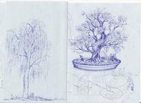 Bonsai, Birken, Baum, Zeichnung