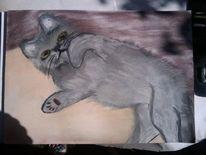 Katze, British kurzhaar, Malerei, Tiere