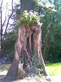 Reiseimpressionen, Figur, Baum, Verwachsen