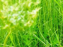 Digital, Stillleben, Digitale kunst, Gras