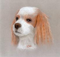 Portrait, Kreide, Pastellmalerei, Hund