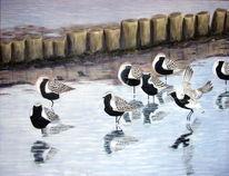 Vogel, Kiebitzregenpfeifer, Meer, Wattenmeer
