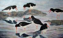 Vogel, Ölmalerei, Austernfischer, Meer