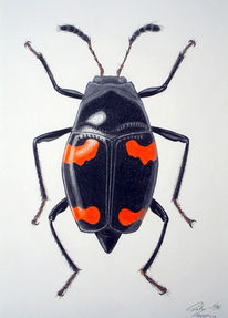 Zeichnung, Käfer, Tiere, Insekten