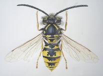 Wespe, Insekten, Malerei, Figural