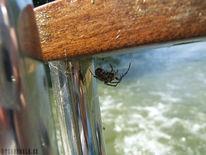 Spinne, Fotografie