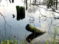 Fotografie, Landschaft, Moor