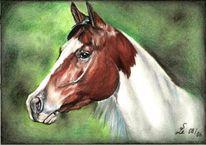 Malerei, Pferde, Portrait, Equine