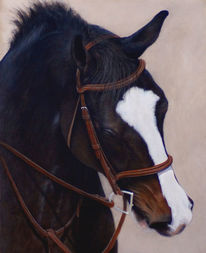 Realismus, Pferde, Augen, Traum