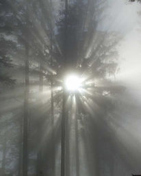Landschaft, Fotografie, Sonne, Nebel