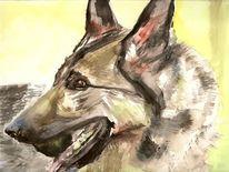 Schäferhund hasso tierheim, Aquarell