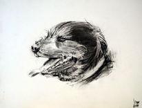 Rocky, Schnauzer, Rottweiler, Hund