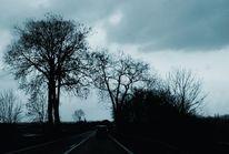 Nachtfahrt, Baum, Abend, Fotografie
