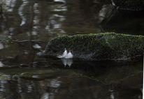 Wasser, Spiegelung, Zart, Stein