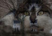 Verfall, Katze, Baum, Winter