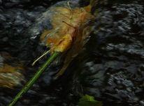Zweig, Wasser, Stromschnelle, Blätter