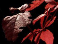 Fotografie, Bodenschätze, Rot