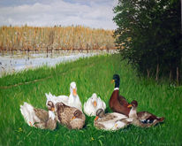Romantisch, Enten, Natur, Teich