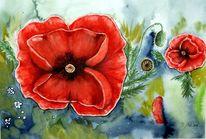 Aquarellmalerei, Blumen, Natur, Mohn