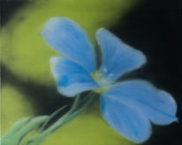 Grün, Blau, Blüte, Malerei