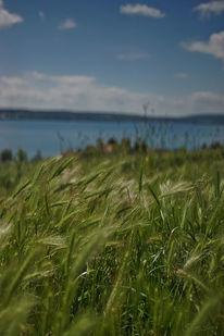 Grün, Sommer, Bodensee, Fernblick
