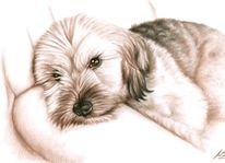 Kohlezeichnung, Fell, Portrait, Zeichnung