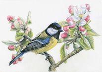 Vogel, Tiere, Portrait, Apfel