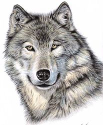 Realismus, Wolves, Fell, Portrait