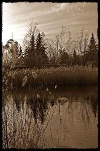 See, Schatten, Sepia, Natur