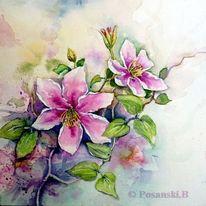Blumen, Aquarell, Clematis