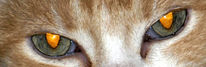 Katze, Augen, Blick, Fotografie