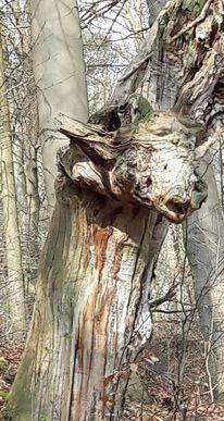 Wald, Fabelwesen, Holz, Mesebergforst