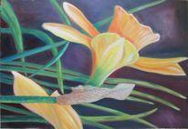 Blüte, Pflanzen, Jahreszeiten, Osterglocke